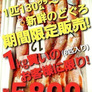 限定販売!魚料理の店舗様から、ご家庭様まで!