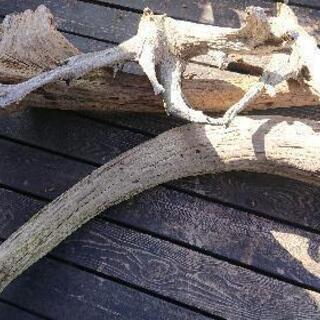 流木のセットになります