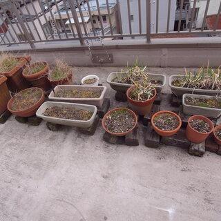 植木鉢、プランター 土入り