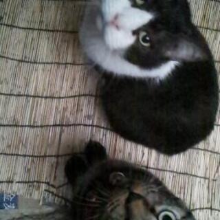 防府市の飼い猫。飼い主探してます。