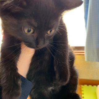 2ヶ月の黒猫姉妹