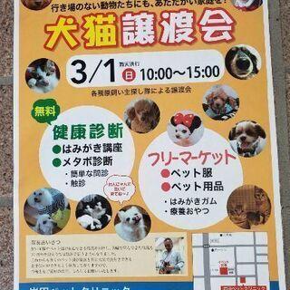 犬、猫譲渡会のお知らせ