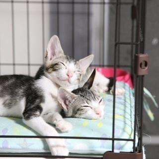 可愛い猫と触れ合える!保護猫シェルターのお掃除ボランティアさん募集!