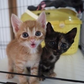 猫好き必見!可愛い猫と触れ合える!保護猫シェルターのお掃除スタッ...