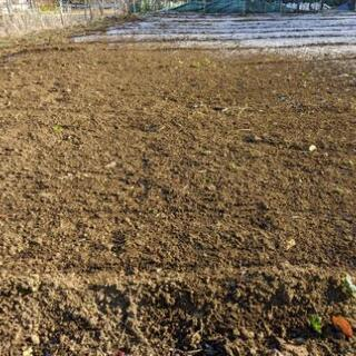 家庭菜園始めたい方募集 年会費無料 シェア畑 体験農園 貸農園