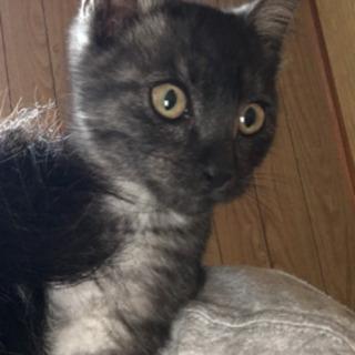2ヶ月くらいの子猫里親さん募集します。