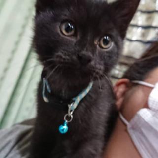 黒猫ちゃんもらって下さい。
