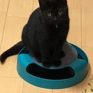 4ヶ月黒猫里親様決定しました。