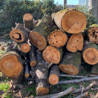 桜の原木 薪用 値下げしました