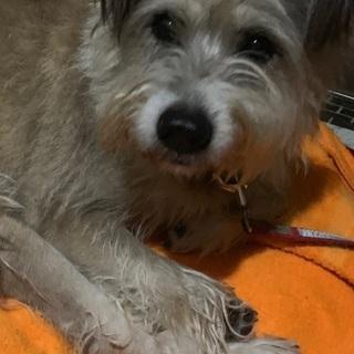 ミックス犬 大型犬10歳