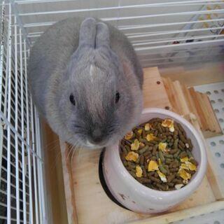 ウサギ及びハリネズミの里親募集