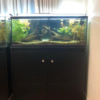 90cm水槽、濾過機、高級専用棚