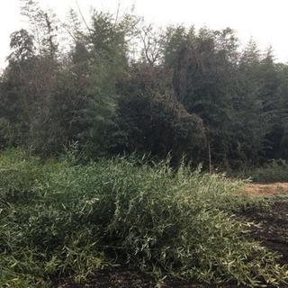 樹木伐採抜根お安く施工致します。