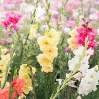 【2/27 豊島区目白】季節の変わり目の過ごし方 冬〜春