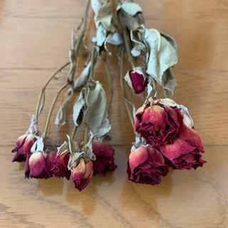 ドライフラワー  薔薇