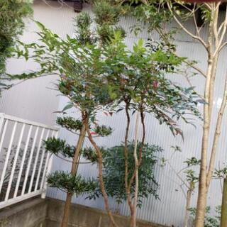 植木 庭の木 植物