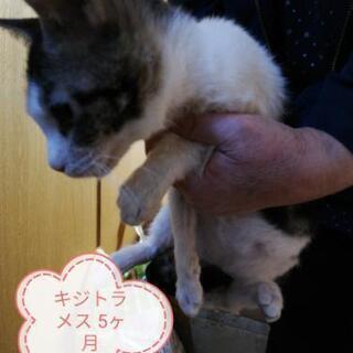5ヶ月のメスです。多頭飼い(12匹)の飼い主が病気で緊急里親募集中!