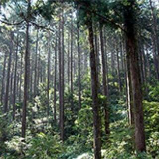 日当2万円 樹木伐倒経験者求むぅぅぅ