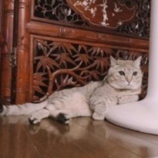 お顔がまんまるの大人しい猫ちゃんです🐱