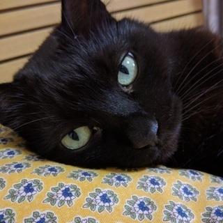 人懐っこい大人しい黒猫ちゃん