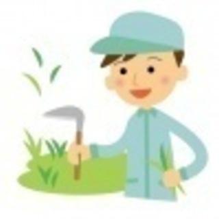 農業教えます。家庭菜園、初めての農業。農作業手伝い可