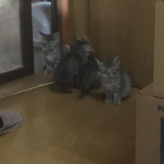 生後2カ月くらいの子猫3匹です。