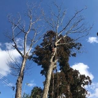 【木の伐採】庭木、屋敷林、居久根、トップカット 伐採お受け…