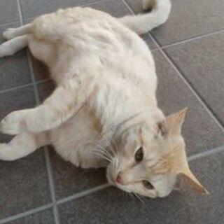 ベージュ色でとてもキレイなネコさんです