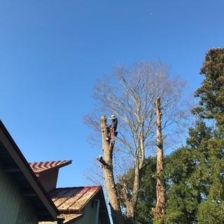 【木の伐採】庭木 屋敷林 居久根 トップカット、伐採お受け…