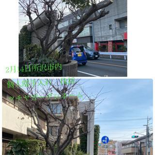 庭の手入れ 木の伐採/外構工事致します(所沢市 狭山市さいたま市...