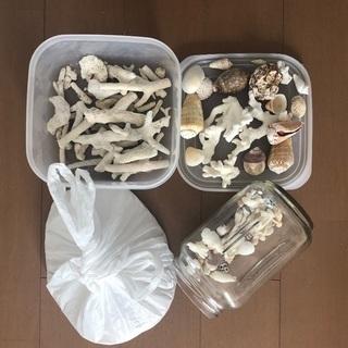 貝殻、珊瑚、サンゴ砂セット