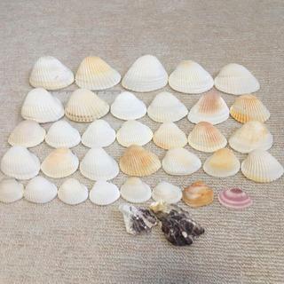 佐賀県 虹の松原海岸の貝殻