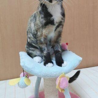 2月23日(日)三鷹で猫の譲渡会に出します❤️ サビ猫のさ…