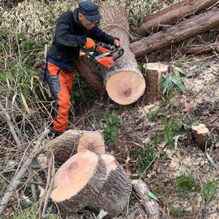 薪割り台など、広葉樹、クヌギ