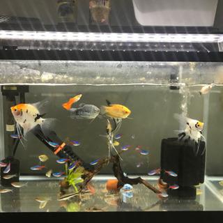 値下げ! 熱帯魚 水槽フルセット