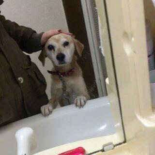 目にハンデのあるミックス犬・女の子