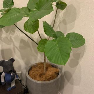 観葉植物の鉢