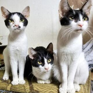 保護猫ちゃんお世話のボランティアさん急募!