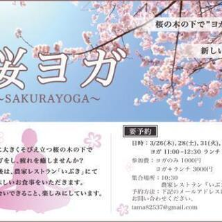 🌸桜ヨガ🌸