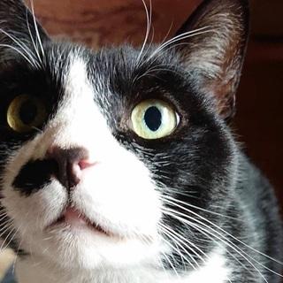おっとりどっしりした猫♂です(去勢済み)
