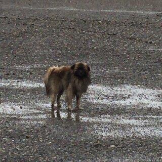 【再掲】 枚方市・迷子犬