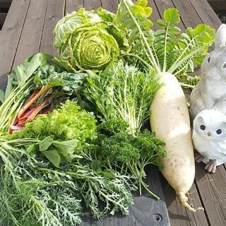 新鮮お野菜BOX【よねベジ】