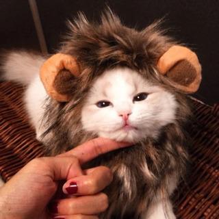 【新品未使用】猫 犬 ライオンのかぶりもの たてがみ 帽子