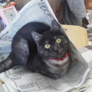 迷い猫 探してます
