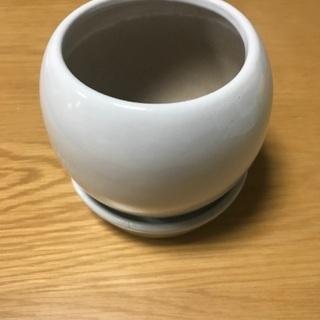 白い観葉植物の陶器