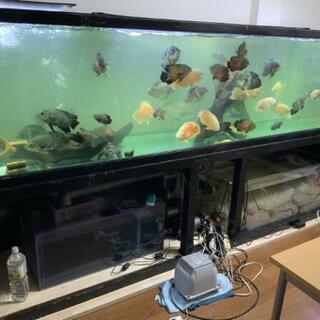 オスカー 熱帯魚ほしい方 見学推奨