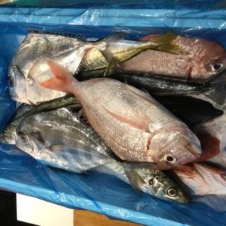 魚と肴の教室