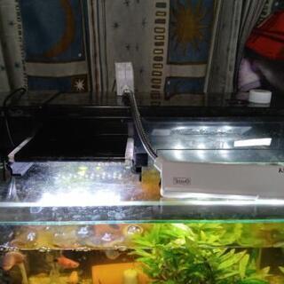 40cm水槽