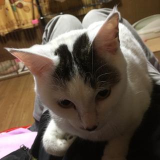 人懐っこい猫ちゃん