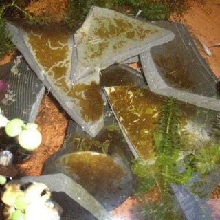 ※お取引中 メダカの 漁礁 割れた瓦 あります。 水の浄化に! - 和歌山市